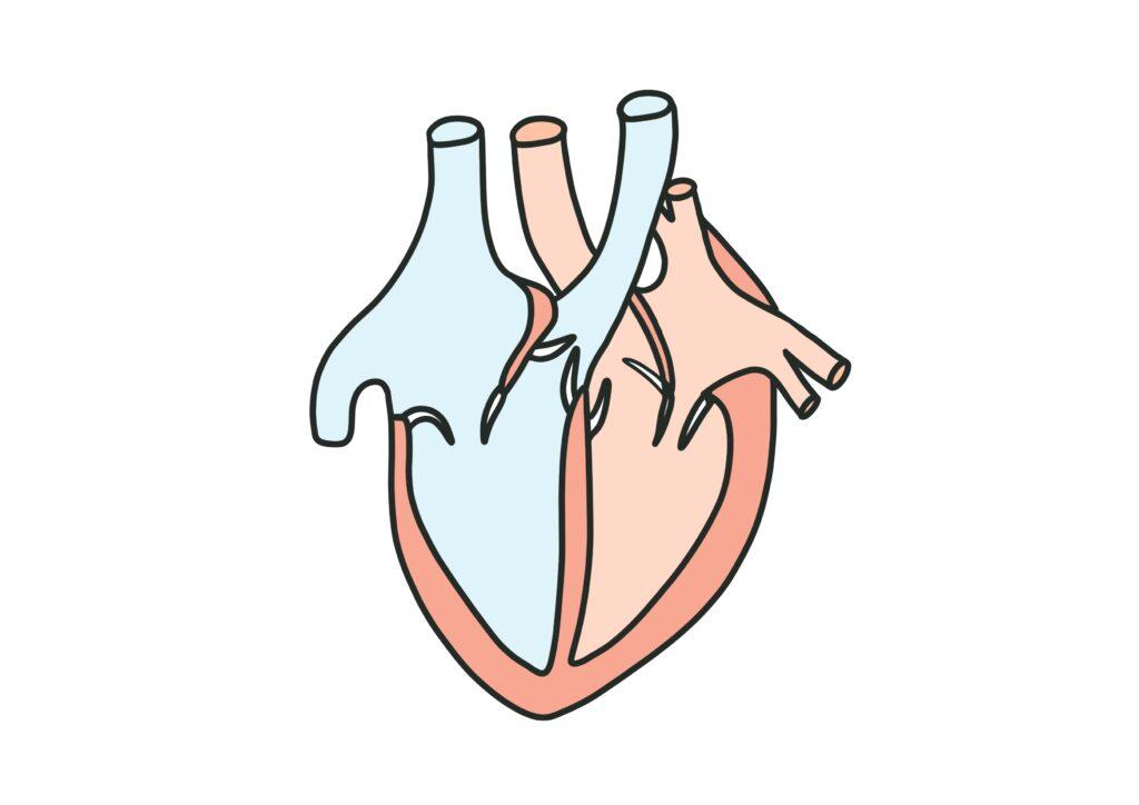 弁膜症と歯周病